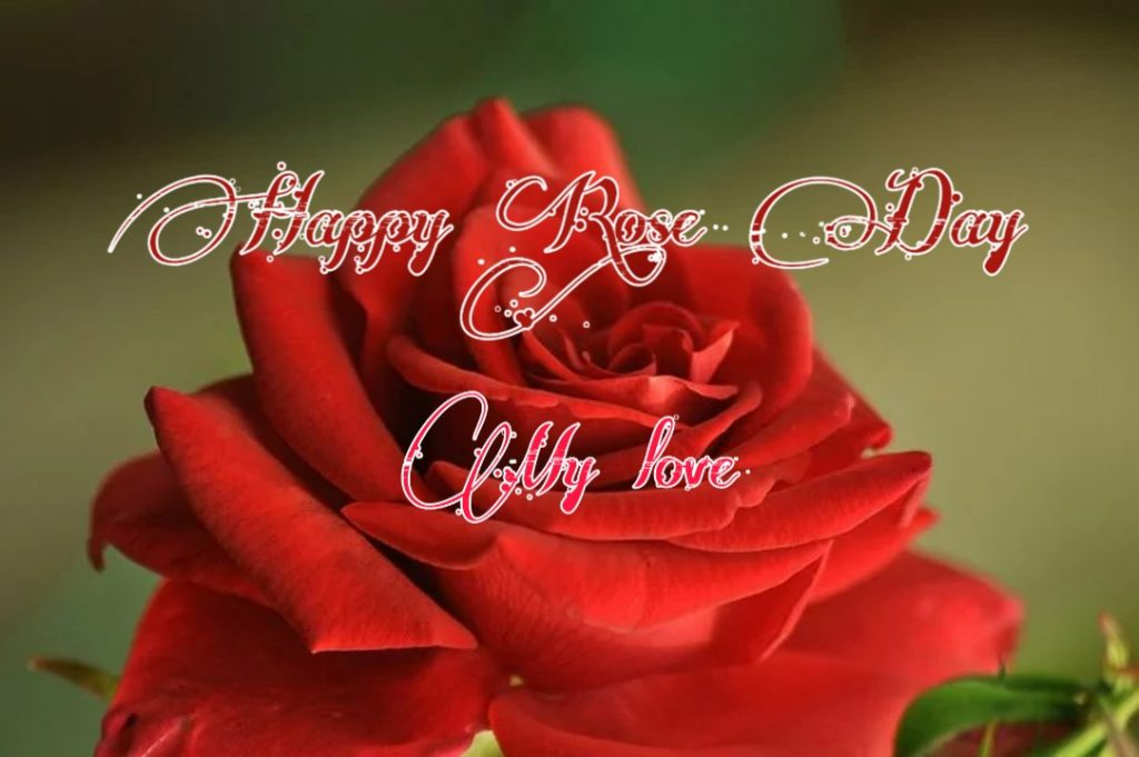happy rose day pic download