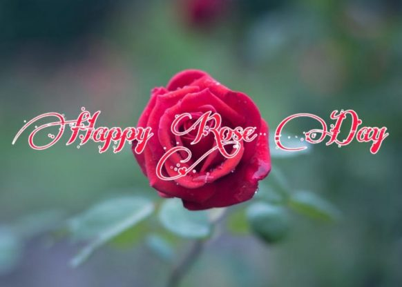 happy rose day images for friends