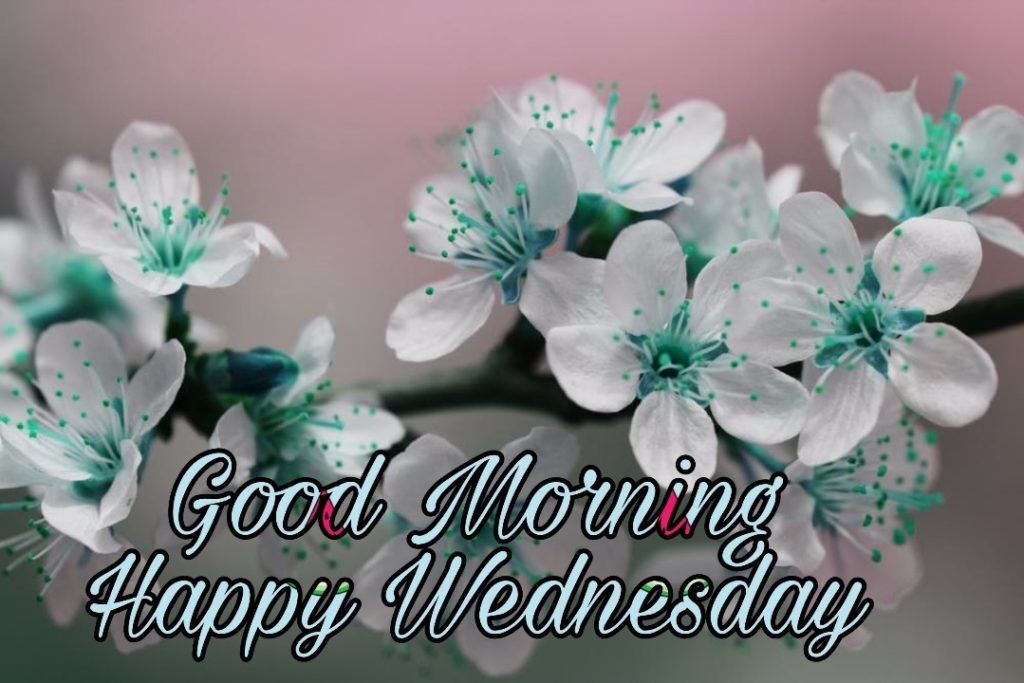 good morning wednesday wallpaper