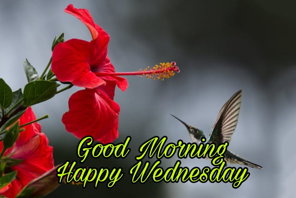 good morning wednesday flowers